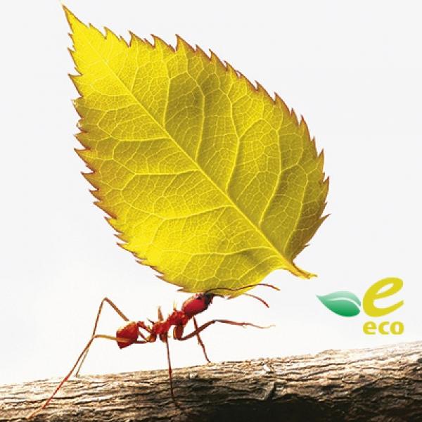 Что такое экологический сертификат