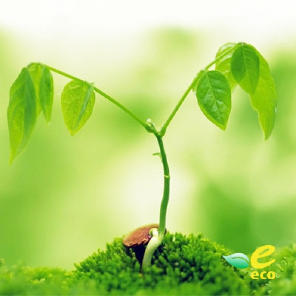 Agricultural Products Eco Certification